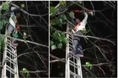 tet pass candidate climbed tree after several hours of difficulty