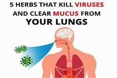 5 herbs that kill viruses and clear mucus from your lungs