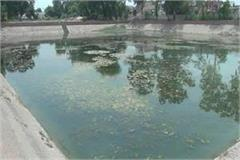 dengue larvae found in public health department ponds