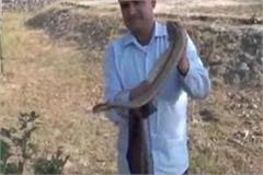 snake man became snake in childhood snake man