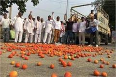 during village close thrown tomatoes on road in radaur mandi