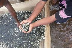 rohu fish seeds to keep chapprs free from larva beginning
