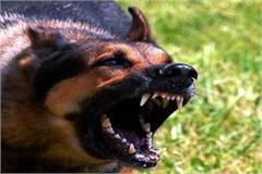 terror of stray dog bite the 5 including minor boy