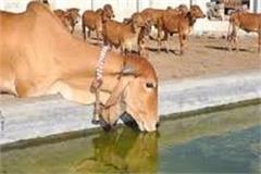gaushalas will get land for fodder cultivation