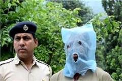 such a big drug supplier in kullu school was caught