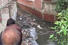 4 children drowned 2 missing due to rain due to rain