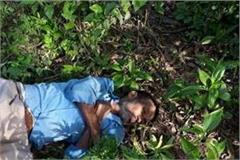 sensation extracted from body corpses found in bushes