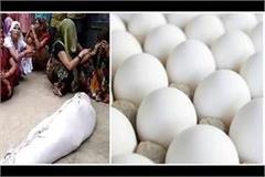 husband made on making eggs not shot shot dead