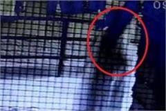 milk packet stolen woman imprisoned in cctv