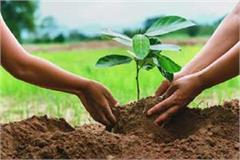8 crore plants will be planted in the state