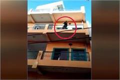bull on the roof of 4th floor in damoh