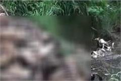 for cows gaushala not cemetery video viral
