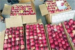 apple season caught speed gardeners farmers getting good price