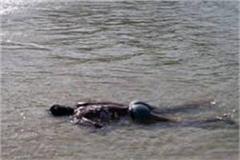 dead body found from nangal dam lake