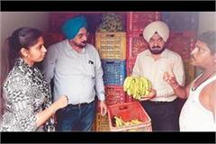 department and market committee investigated fruit producing chambers