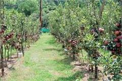plenty of apple plants come from italy open