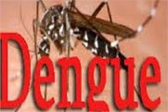 dengue spikes in punjab