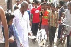 a lot of discussion of this goat in gorakhpur the price will be surprised