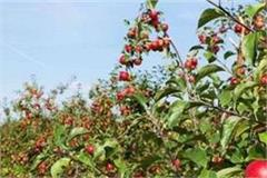 cm and horticulture minister of approval the purchased italy apple plant