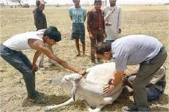 this service started by the municipal corporation for the sick cattle