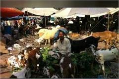 goat market open due to eid ul azaha in bhopal