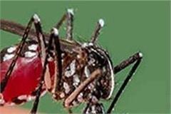 dengue outbreaks in the sub organ failure