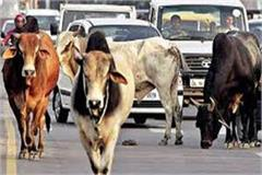 now those who leave the animals on the roads