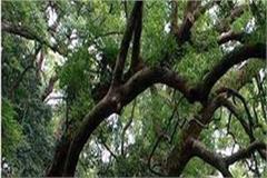 nh from will move hazardous tree