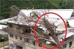 dropped trees on building in iit kamand
