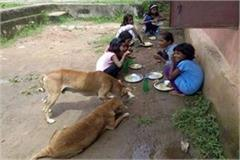 n this school of the school girls are eating pigeoes for dogs