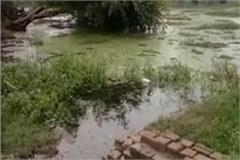 found woman s dead body in pond