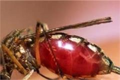 dengue not staying in bilaspur 21 new cases registered