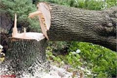 6 trees cut from government land complaint filed by department