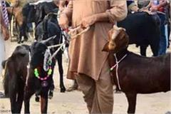 thievs exchange dog against goat kanpur during bakra eid