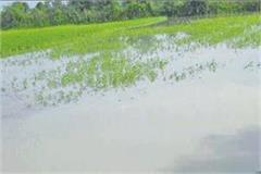 special girdavari orders of crops 59 villages affected by floods