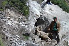 rocks fall from hills in rampur more than 200 goats dies