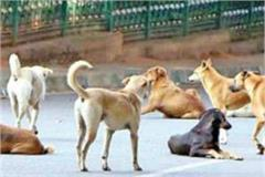 dog attack in hoshangabaad