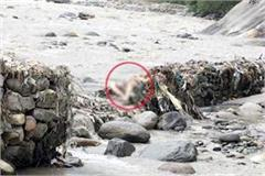 kangra s missing man found in this condition in manali read news