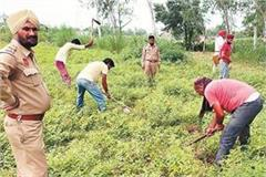 forest department removed illegal occupation over 12 acres of land