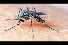 dengue outbreak not stop in bilaspur 18 new case came front