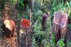 axe on 5 tree in bhogrvan
