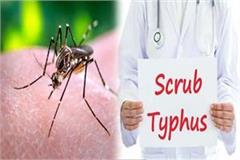 19 cases of dengue and 5 cases of scrub typhus positive in mandi