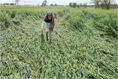 want to gridawari of crushed crop register here