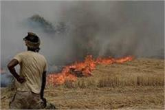 arms license of stubble burning farmers will be canceled
