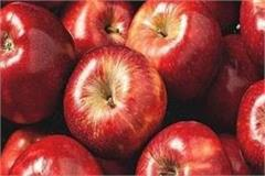 bumper crop dropped apple prices gardeners had to suffer loss