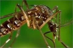 dengue spreads after scrub typhus 4 patients reach igmc