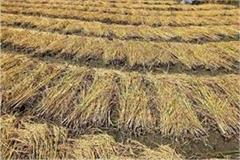 farmers reach small secretariat for stubble problem