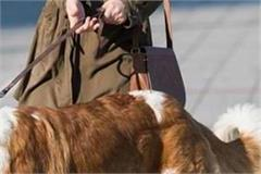 pet dogs will have to be registered