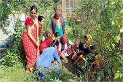 plantation campaign