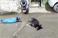 dogs found dead in circular road